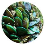 El extracto de mejillón verde