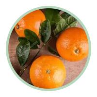Estratto di arancia amara